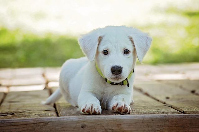 perro cachorro
