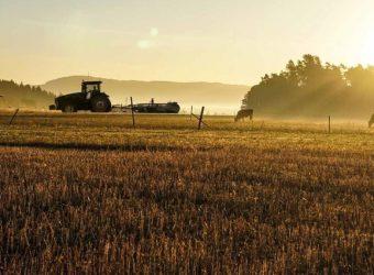 agroseguro cereales