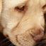 mussap mascotas