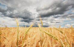 Agroseguro cereales pedrisco