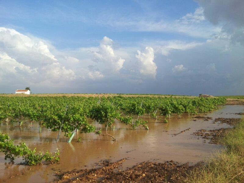 Agroseguro daños viñedos Castilla-La Mancha